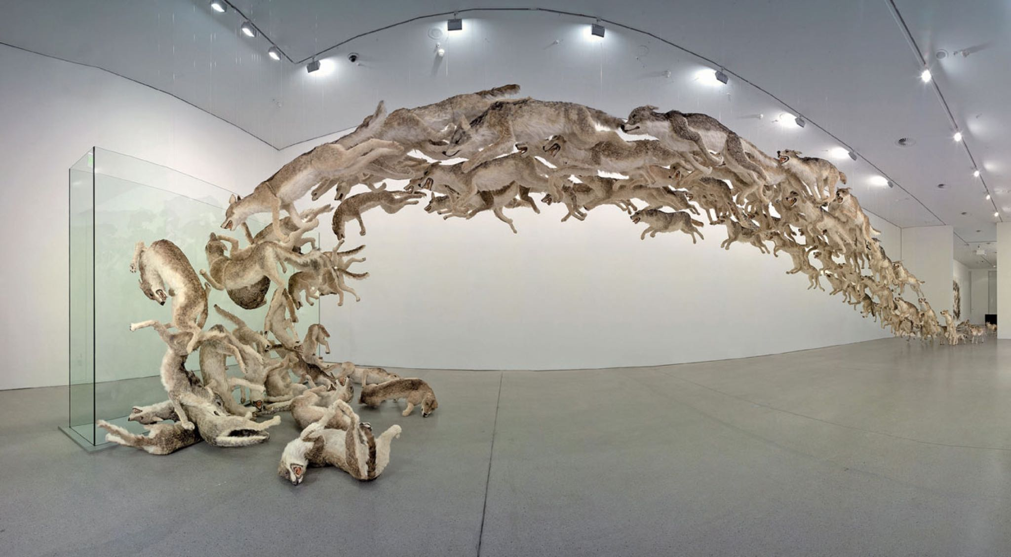 Head on- 999 reproducciones de lobos chocando contra un muro-Reflejo de la tendencia humana